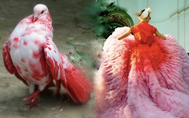 pigeon rouge dress