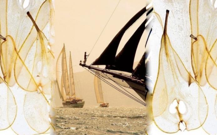 fairy sail