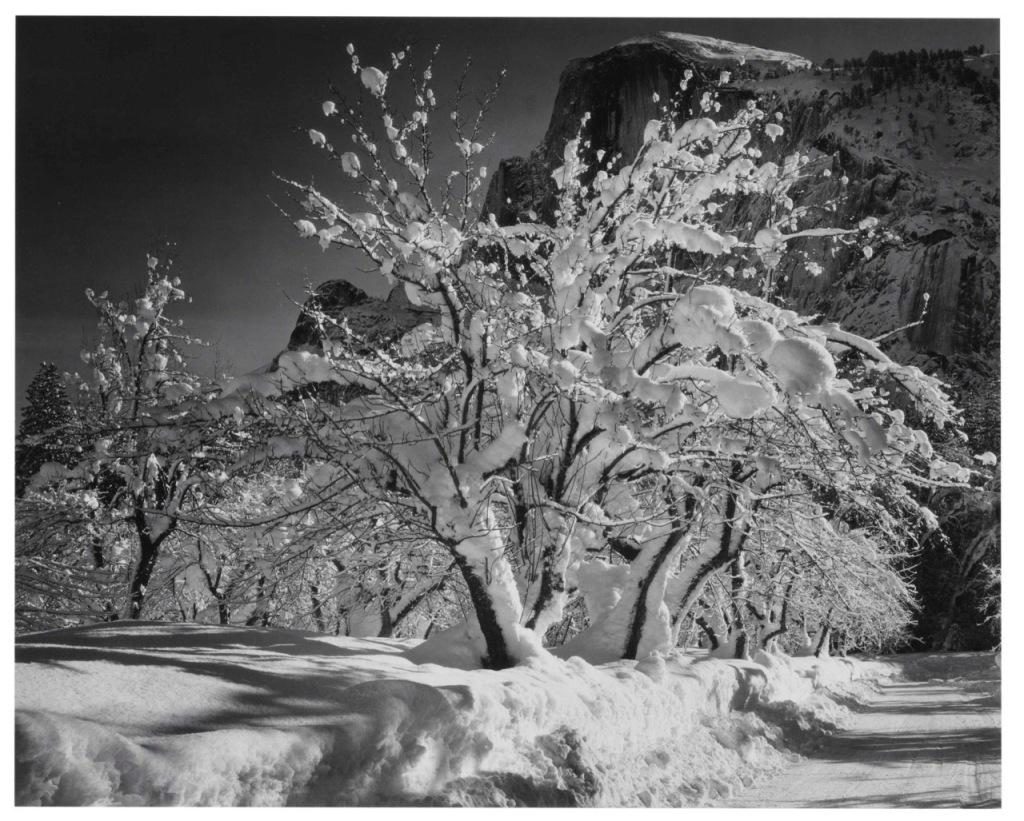 ansel adams yosemite apple orchard 1935