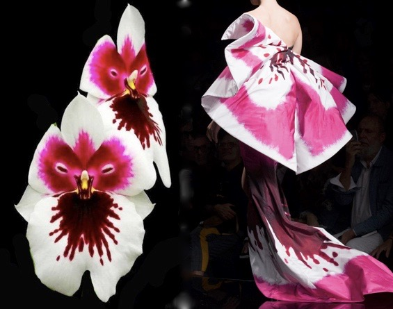 moschino 18 orchid