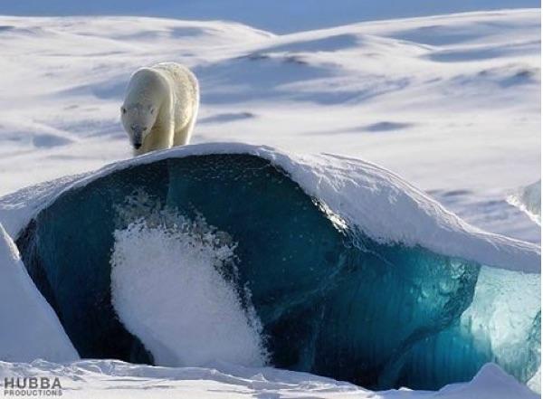 Bear ©fred geanath salalbard