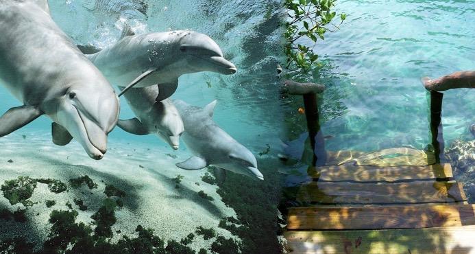 dolphins escalier