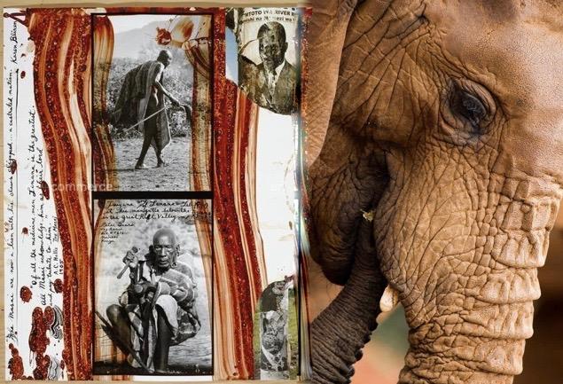 peterbeard elephant