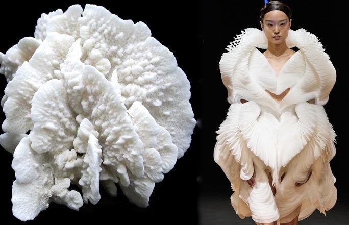 Iris cactus coral white
